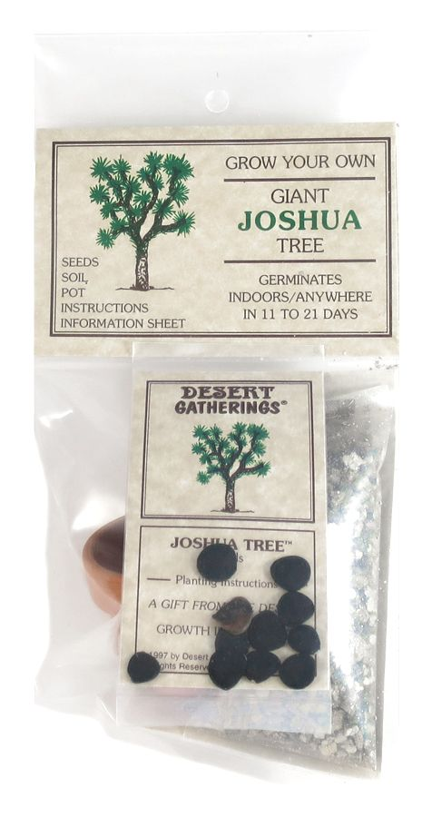 Grow Your Own Giant Joshua Tree Kit