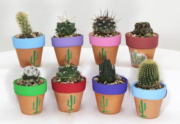 Magnet Cactus Pot